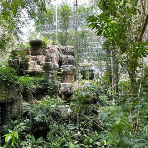 Rainforest in the middle of the desert? Biosphere 2 Review